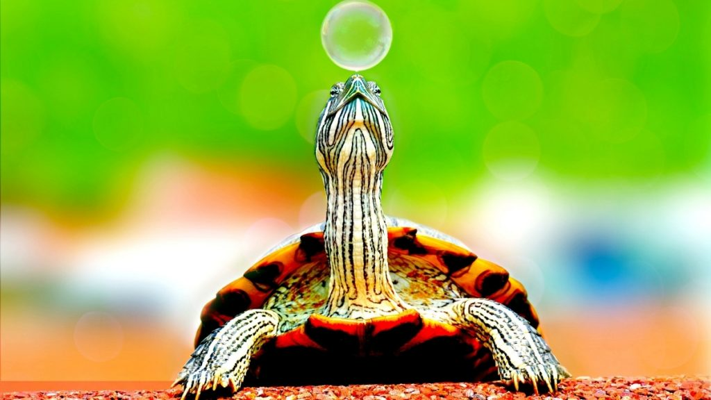 National Marine Turtle Action Plan launched by Shri Prakash Javadekar - India press release
