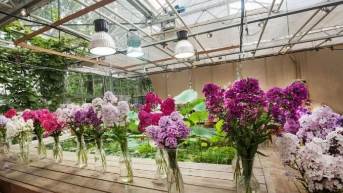 Agra's horticulture department organizes flower exhibition - India press release