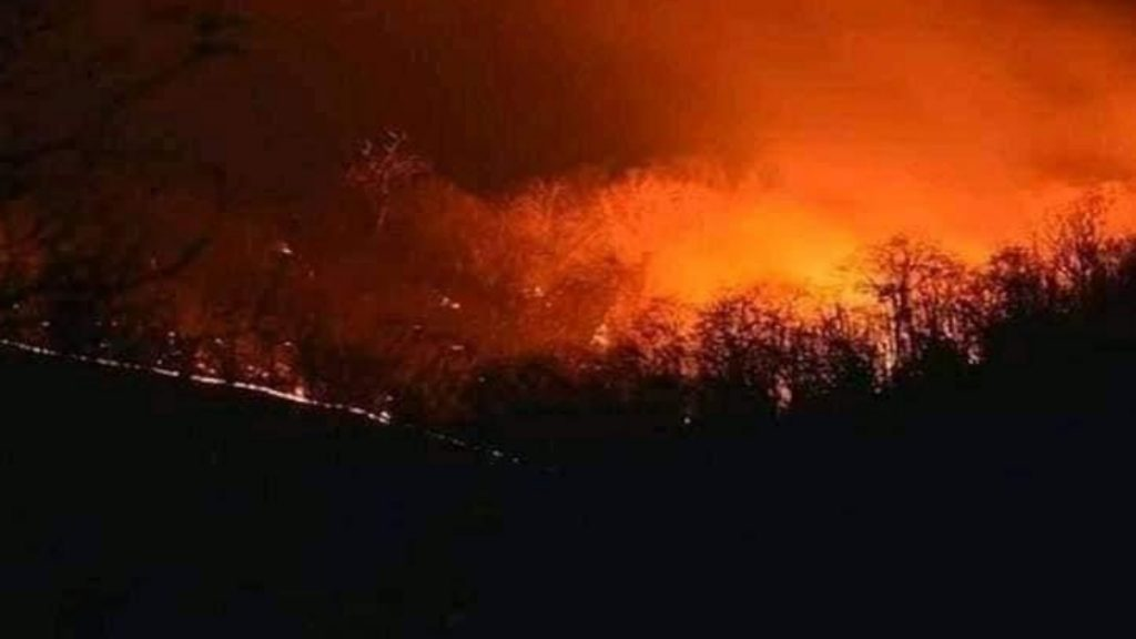 Forest fire contained and controlled in Odisha