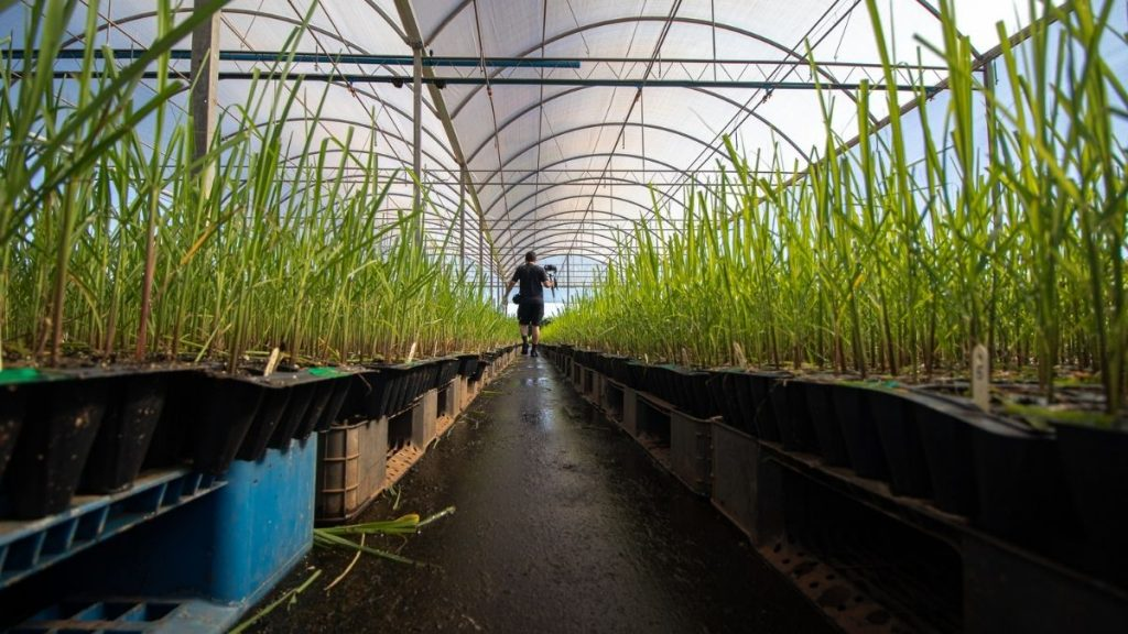 The horticulture sector can play an important role in doubling farmers' income