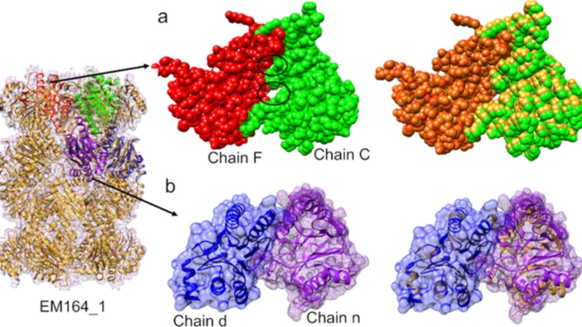 Cryo-EM facilities can help research in structural biology, enzymology, and drug discovery to combat new and emerging diseases