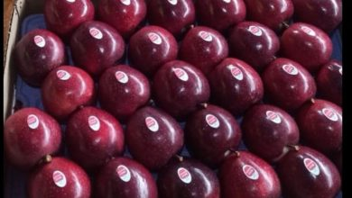 APEDA in collaboration with HPMC exports five unique varieties of apples to Bahrain
