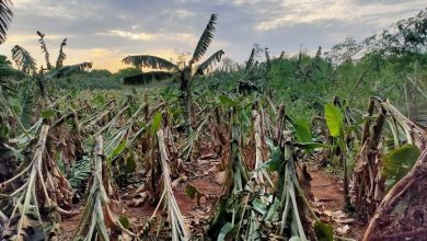 Farmers affected by Cyclone Yaas